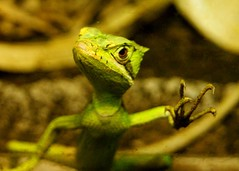 Lizard (WISEBUYS21) Tags: hot green moving eyes long slow tail alien lizard huge climate claws creeping wisebuys21