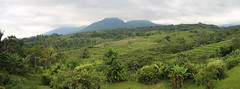 Panoramic Lunctime View (Wormey) Tags: bali indonesia photoshopped 2016 stitchedpanorama canon650d