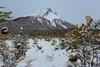 Parque nacional Tierra del Fuego 2 (José M. Arboleda) Tags: patagonia argentina canon tierradelfuego ushuaia eos nieve jose 5d invierno arboleda parquenacional markiii ef24105mmf4lisusm josémarboledac