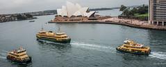 2016 - Sydney - Circular Quay Ferries