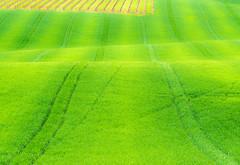 _DSC5305 (Giuseppe Cocchieri) Tags: light color verde green primavera colors landscape countryside spring nikon colore earth valle campagna giallo nikkor terra colori luce paesaggio vallata allaperto