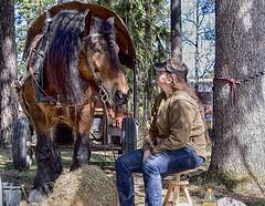 Euro och Nina (G Er Foto) Tags: horse euro drafthorse hst ardenner marknad rttviksmarknad sderstrmshstochnatur