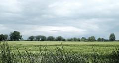 Kamen Westick (Uwe M@nzke) Tags: green nature field 35mm fuji natur feld fujifilm landschaft kamen westick xt10