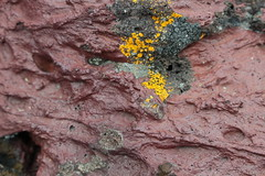 Lichen on lava (rozoneill) Tags: ontario oregon flow volcano lava hiking vale craters jordan crater valley blm coffeepot