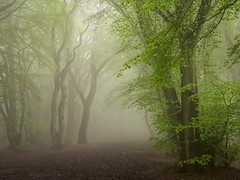 Softly (Damian_Ward) Tags: wood morning trees mist misty fog forest woodland photography spring buckinghamshire foggy beech thechilterns chilternhills damianward ©damianward