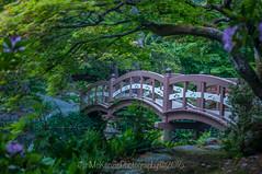 Royal Roads Japanese Garden (jsnmckenzie) Tags: bridge japanesegarden bc britishcolumbia victoria rru hatleycastle royalroads colwood japanesefootbridge