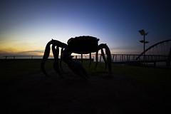 Alien invasion (Thunder1203) Tags: beach canoneos7d frankstonpier hoyafilters landscape longexposure morningtonpeninsula portphillipbay sandsea seascape sigma1020f4f56 sky sunset thunder1203 victoria water horizon wideangle