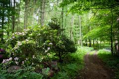Forest Walk (katezillaa94) Tags: green forest canon eos scotland walk sunny aberdeen dee garthdee