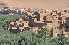 Valle de Dades (pasquib) Tags: africa trees nature fruit palm morocco maroc dates kasbah valle dades