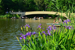 Lovers' Row (Thomas Dwyer) Tags: lake newyork boat nikon centralpark row tokina 1224 bowbridge d7000 thomasdwyer