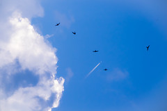 Spitfire-Martinet (Elmo Flem) Tags: sky cloud bird birds plane fuji jet bleu ciel spitfire nuage avion martinet xt1 sparow ouseaux fujixt1