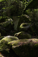 Triberg 9 (stealthflower) Tags: trees water june forest germany waterfall europe demolition blackforest triberg 2016