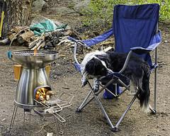 Violet Keeping Warm (punahou77) Tags: california camping violet stove sierras sierranevada wardlake stevejordan nikond7100 punahou77