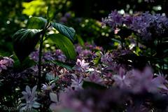 CRW_8434 (kisugi802) Tags: eosd60 2016 長居植物園 20160618
