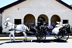 Better Than a Limo (Venancio Vargas) Tags: family wedding horse beautiful nikon carriage nj sunny cousin whitehorse d810 nikkor28mmf18