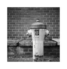 hydrant (ha*voc) Tags: urban bw 120 6x6 tlr haarlem mediumformat square utility urbanfragments ilforddelta100 mudane rolleiflex35f carlzeissplanar75mmf35