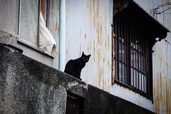 Today's Cat@2016-06-29 (masatsu) Tags: cat pentax osaka catspotting mx1 thebiggestgroupwithonlycats