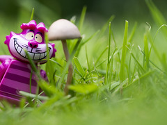 Chesire's been on the Magic Shrooms... (Jam-Gloom) Tags: macro mushroom grass cat toy photography lego olympus disney fungi fungus toadstool 60mm omd aliceinwonderland legominifigure chesire chesirecat 60mmmacro 60mm28 toyphotography legominifig em5 disneytoy disneytoys legofigure toyography 60mmmacro28 legodisney legofigurine olympusomd olympusomdem5 legorine