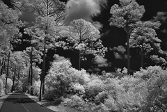 Trail Gulf State Park (Howell Weathers) Tags: trees blackandwhite nature monochrome clouds ir outdoor alabama trail infrared gulfstatepark