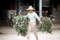 32-192 (ndpa / s. lundeen, archivist) Tags: nick dewolf nickdewolf 32 reel32 color photographbynickdewolf 1970s 1972 fall film 35mm winter republicofchina taiwan taiwanese eastcoast easterntaiwan hualien hualiencounty easterncoast rurallife village unidentified people woman carry carrying yoke shoulderyoke hat conicalhat bike bicycle china chinese shoulderpole carryingpole 1973