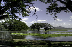 Lake (Janslb) Tags: trees sky lake water landscape geotagged nikon explore srilanka landschap azi tissamaharama allrightsreserved weerawila nikond7000 tissalake