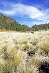 IMG_1203 (hoki.peace) Tags: camping indonesia semeru savana mountsemeru gunungsemeru ranupani ranukumbolo visitindonesia padangrumput wisataindonesia campvibes