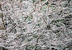 Ice Storm Abstract (Pauline Brock) Tags: winter canada abstract ice nature rain icestorm icy freezingrain flickrfriday afterholidays