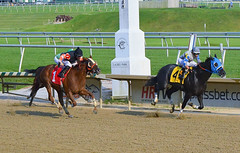 "2014-09-18 (161) r9 Jose Betancourt on #4 Awol (JLeeFleenor) Tags: photos photography laurelpark laurelracecourse marylandracing marylandhorseracing md jockey جُوكِي ""赛马骑师"" jinete ""競馬騎手"" dżokej jocheu คนขี่ม้าแข่ง jóquei žokej kilparatsastaja rennreiter fantino ""경마 기수"" жокей jokey người horses thoroughbreds equine equestrian cheval cavalo cavallo cavall caballo pferd paard perd hevonen hest hestur cal kon konj beygir capall ceffyl cuddy yarraman faras alogo soos kuda uma pfeerd koin حصان кон 马 häst άλογο סוס घोड़ा 馬 koń лошадь winner dog maryland"