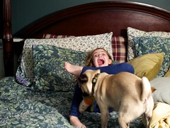 2014.11.26-20.19.48 (Pak T) Tags: dog bed kat pug bennett legacylens asanuma28mmf28 konicamountlens
