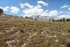 Cryoturbation along the JMT (supersky77) Tags: california sierra sierranevada day8 jmt highsierra solifluction johnmuirtrail cryoturbation crioturbazione soliflusso