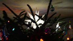 Christmas Tree 2014 (JeffCarter629) Tags: christmas christmaslights ge vintagechristmas vintagechristmaslights generalelectricchristmas gechristmas gechristmaslights generalelectricchristmaslights