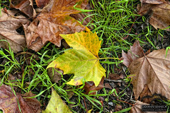 Autumn leaves (Giovanni Senneca) Tags: autumn italy brown sun green grass canon photography flickr effect followme canon30d addlike colorfule