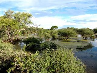 Botswana Hunting Safari 24