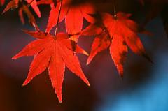 Inuyama Castle, Inuyama-j, Inuyamaj, Inuyama, Aichi, Japan, , , , , , , , , , , ,  (bryan...) Tags: japan canon print iso100 kodak  aichi inuyama eos50  ektar   canoneos50  inuyamacastle colornegativefilm    inuyamaj   kodakprofessionalektar100film