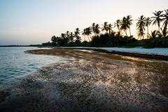 The Westin Puntacana Resort & Club, Dominican Republic. (Flash Parker) Tags: ocean travel sand nikon surf dominicanrepublic adventure caribbean nikkor puntacana freelance d800 thewestin flashparker wwwflashparkercom dominican88089