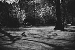IMG_2120 (ODPictures Art Studio LTD - Hungary) Tags: uk england dog white black london monochrome canon eos downtown unitedkingdom 85mm inner shit f18 magyar hungarian 6d 2013 odpictures odpictureshu