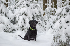 Winter (sxdlxs) Tags: santa christmas winter dog sun snow color colour reflection tree green nature colors animal forest season landscape colorful colours natur decoration santaclaus potrait wald