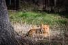 Reds-0297.jpg (riccardo.bordese) Tags: red cats cat beautifulcats