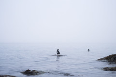 isolation (Asher Isbrucker) Tags: ocean mist bird water fog vancouver clouds duck rocks bc cloudy surface minimal ripples fowl simple barrowsgoldeneye insidevancouver