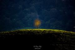 Alone... (madi_patub) Tags: sunrise indonesia landscape bogor landscapephotography teafield inexplore landscapeshot