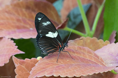 Butterfly 2016-56 (michaelramsdell1967) Tags: light red plant color macro love nature beautiful beauty animal animals closeup butterfly bug garden insect photography hope photo spring natural vibrant wildlife butterflies vivid insects bugs zen upclose