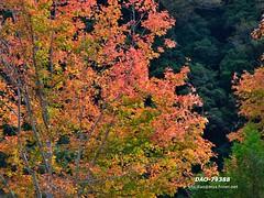 DAO-79388 (Chen Liang Dao  hyperphoto) Tags: taiwan