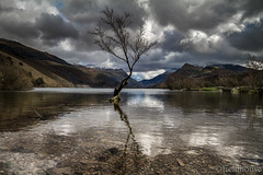 ...drowned roots. (lars feldhaus) Tags: travel landscape nature tree clouds roadtrip europe