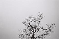(SingC) Tags: china blackandwhite bw tree beijing 400tx kodaktrix400 leicaminilux 40mmf24summaritlens