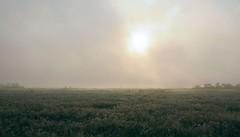 Auf einer Kuhweide auf Klken; Bergenhusen, Stapelholm (15) (Chironius) Tags: stapelholm bergenhusen schleswigholstein deutschland germany allemagne alemania germania    ogie pomie szlezwigholsztyn niemcy pomienie morgendmmerung sonnenaufgang morgengrauen  morgen morning dawn sunrise matin aube mattina alba ochtend dageraad zonsopgang   amanecer morgens dmmerung nebel fog brouillard niebla gegenlicht