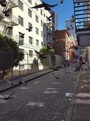 20160623_183712 (Moyer566) Tags: birds pigeons fly flying alley sanfrancisco walking moviereference summer roadtrip citylife