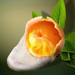 Egg or fruit? (jaci XIII) Tags: fruit photoshop egg fruta montage citrus fotomontage ovo bergamot ctrico bergamota