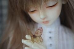 21/06/16 (BallJointedGaleth) Tags: dreaming moths bjd luts kd bory balljointeddolls bjg kiddelf zylah dreamingbory balljointedgaleth