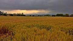 Taken With LG Nexus 5X (daniyal62) Tags: 5x nature nexus landscape lg iran mashhad