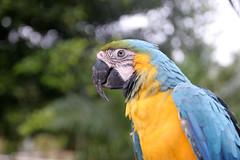 Costa-Rica-23